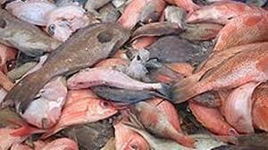 poissons-p